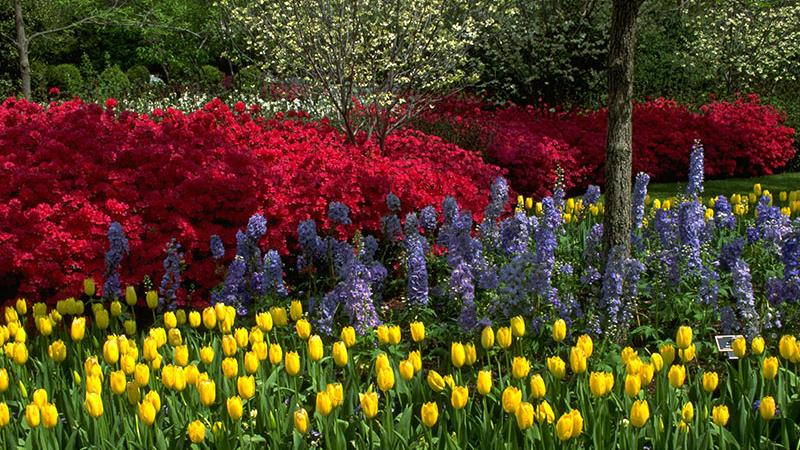 Landscape Design Azaleas In Dallas And The Case For Native Plants