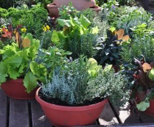 The Growing Trend Of Edible Landscape Design Bonick Landscaping