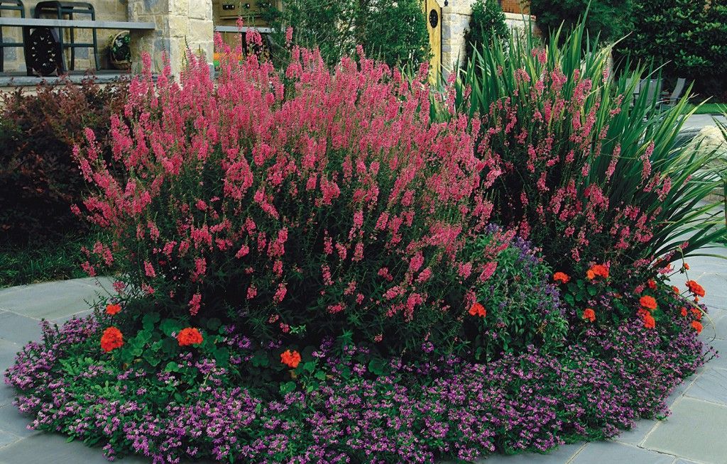 Dallas Landscaping With Our Favorite Summer Annuals Bonick