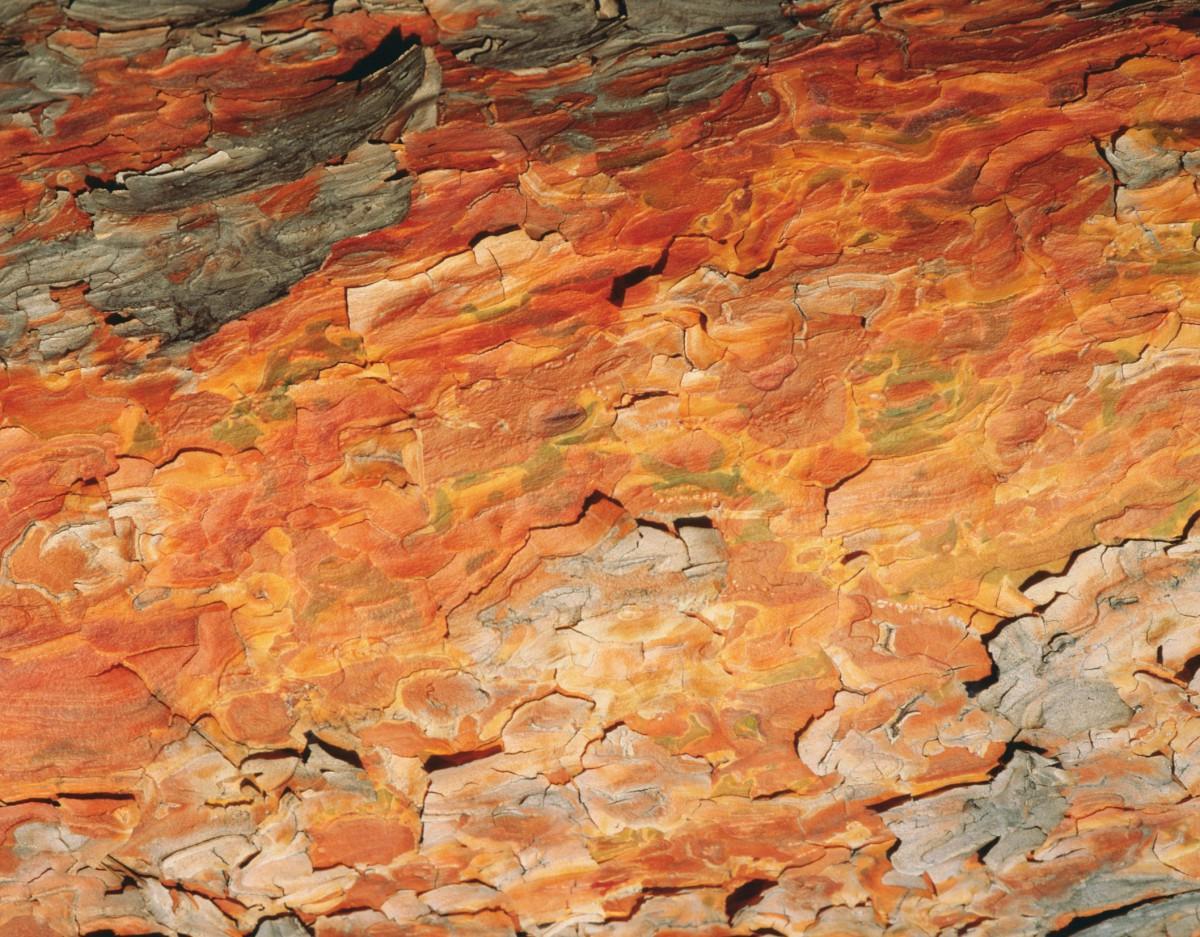 Bonick Landscaping The Beauty of Bark