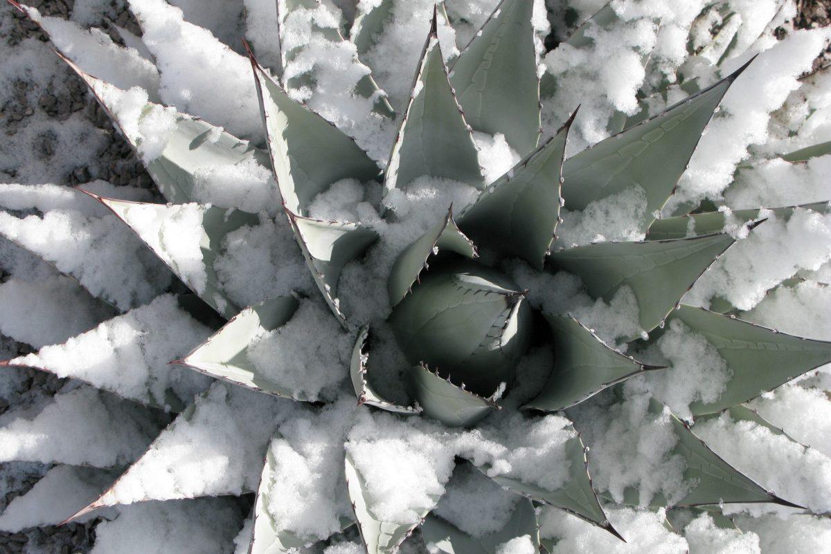 Texas Freeze Preparedness